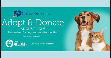 The Animal Foundation's 'Clear The Shelters' Promo