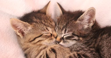 Kittens snuggling together in cuteness overload