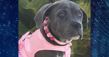Pet Of The Week Georgia