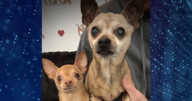 Pet Of The Week Mouse & Munchkin
