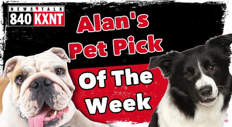 Pet Pick of the Week
