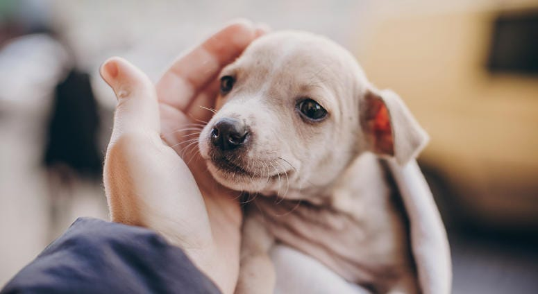 A puppy finds its forever home