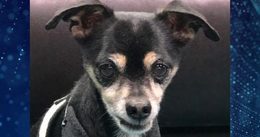 Pet Of The Week Chester