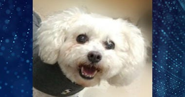Pet Of The Week Daisy