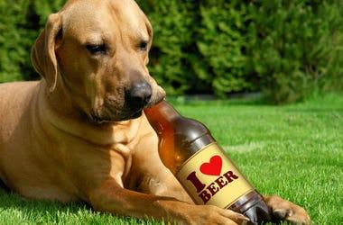 dog brew