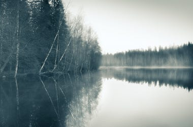 lake with fog and trees