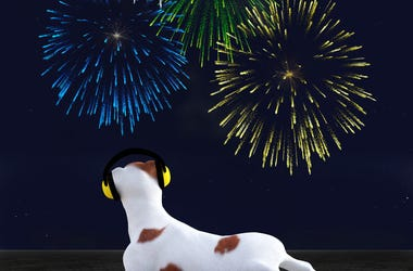 Dog and Firework
