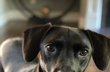 Happy Black Dog Day