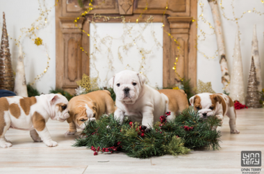 bulldogs photoshoot