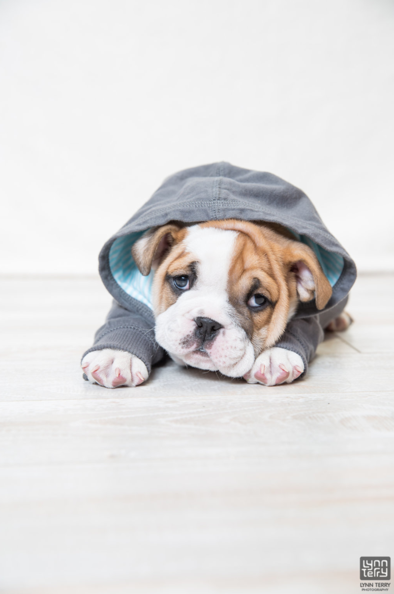 BulldogPhotoshoot