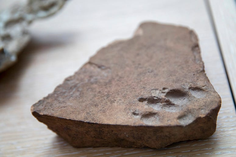 A terracotta dog paw print dating back to the Roman Empire.