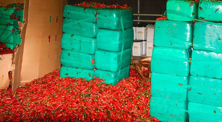 Marijuana seized alongside jalapeno peppers