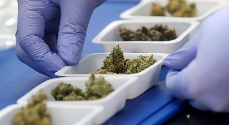 In this Friday, Aug. 16, 2019, photo, chemist David Dawson displays various samples of marijuana while being interviewed at CW Analytical Laboratories in Oakland, Calif.