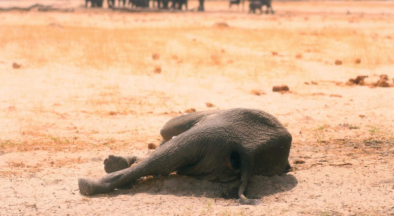 A dead elephant lays in the Hwange National Park, Zimbabwe, on Sundnay, Nov. 10, 2019.