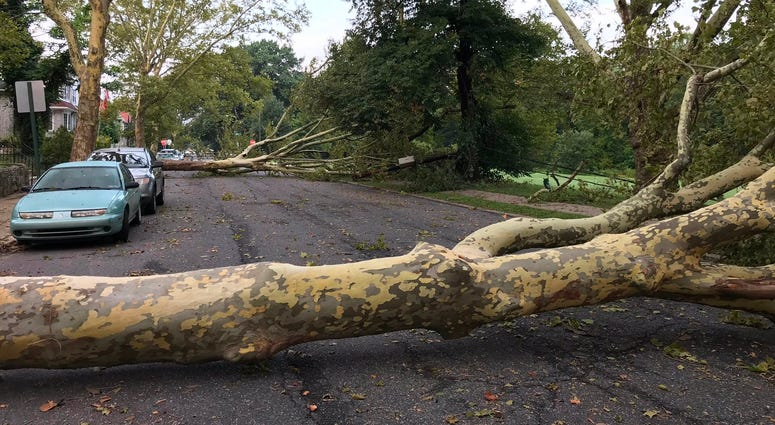 In Philly's Wissinoming neighborhood, on Charles Street near Comly Street, the wind lifted two enormous sycamore trees out of the ground.