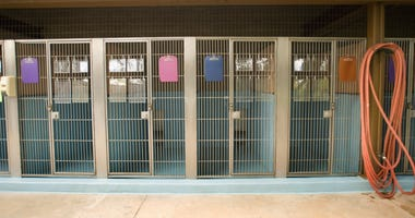 Vacant kennels