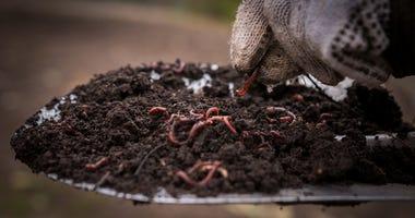 Earthworms.