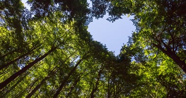 Forest with heart-shaped canopy