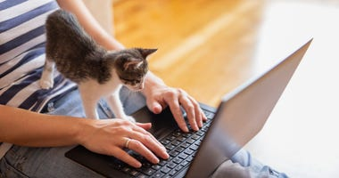 Woman on computer with kitten