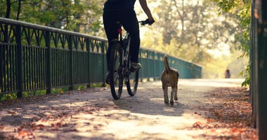 Person cycling with their dog