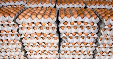 Industrial-size pallets of eggs
