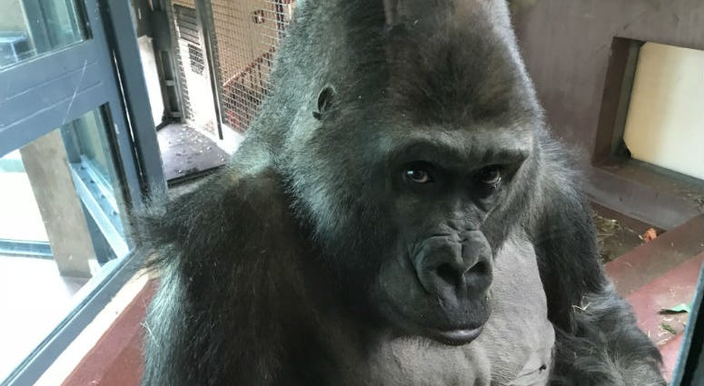 The Philadelphia Zoo held a big birthday bash for one of its popular residents, and it was more than just a party.