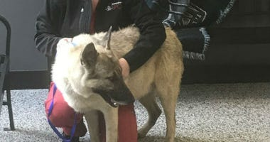 A local animal rescue extends its arms to help some furry four-legged friends from all the way down south.