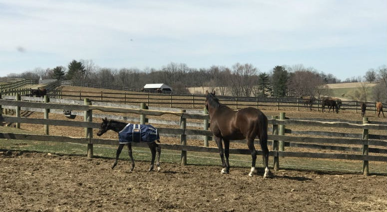 A baby horse born on a Chester County farm earlier this month has a lot of people betting on his bright future.