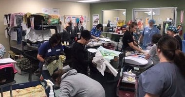 ACCT Philly held a weekend Trap-Neuter-Return clinic, spaying, neutering, and vaccinating close to 300 cats.