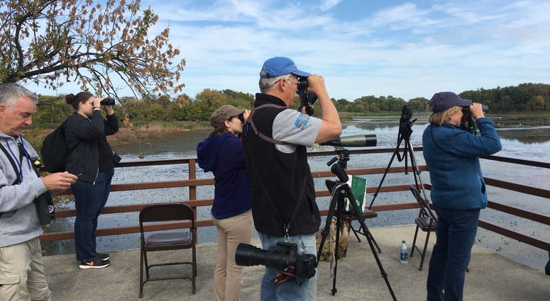 Area birders come together at John Heinz Wildlife Refuge for the Big Sit event, held simultaneously in 44 countries.