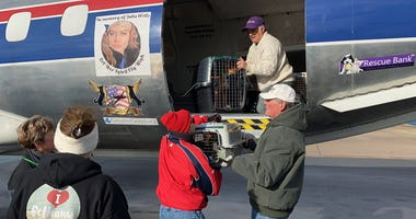 The Brandywine Valley SPCA along with their partners helped save 110 dogs so far from earthquake-devastated Puerto Rico.
