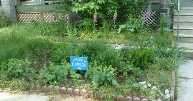 A rain garden on display, made possible by the Rain Check program.