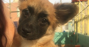 The PSPCA rescued 17 cats and six dogs from a home in Harrowgate, adjacent to Kensington.