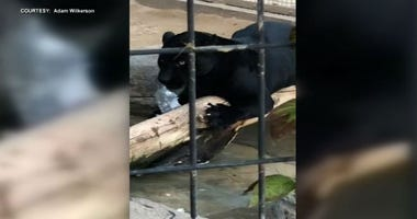 A woman who was attacked by a jaguar at an Arizona zoo has apologized for the incident, according to a zoo spokeswoman.