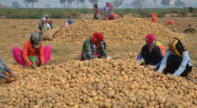 "PepsiCo says the farmers were ""illegally"" growing its registered variety of potatoes."