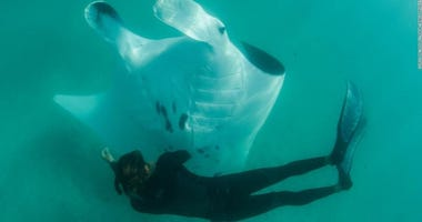 Manta Ray Encounter