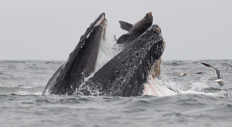 Whale and Sea Lion