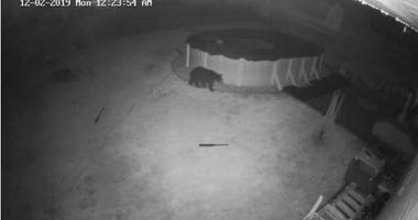 A black bear was spotted via surveillance footage from Springfield resident Joe DePaul.