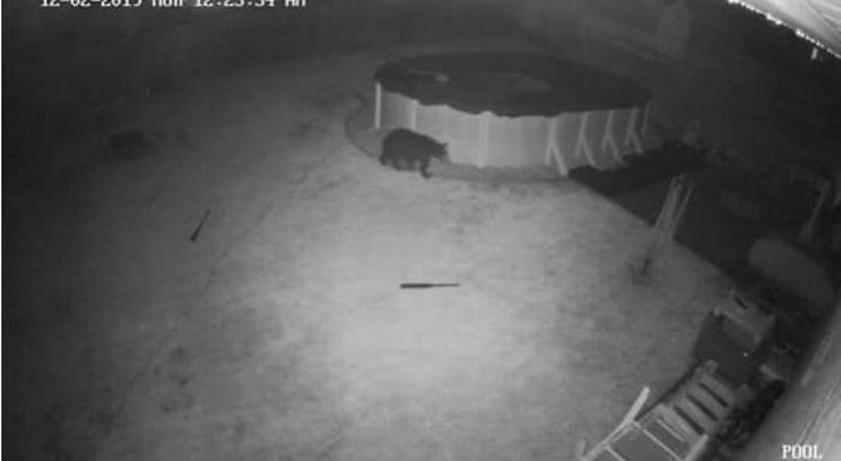 A black bear was spotted via surveillance footage from Springfield resident Joe DePaul.