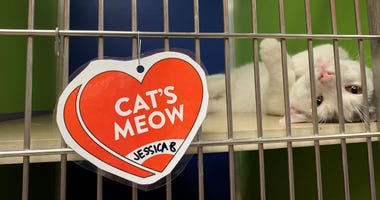 Animal lovers can support shelter animals by buying a valentine.