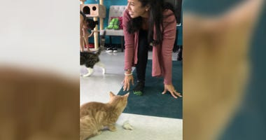"""People and cats taking part in a """"cat yoga"""" class in Delaware County"""
