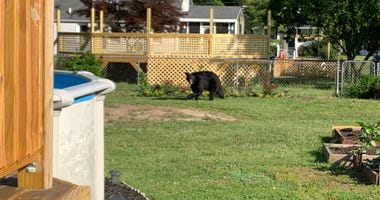 A black bear that has been wandering around South Jersey was spotted in Deptford Township on Tuesday morning.
