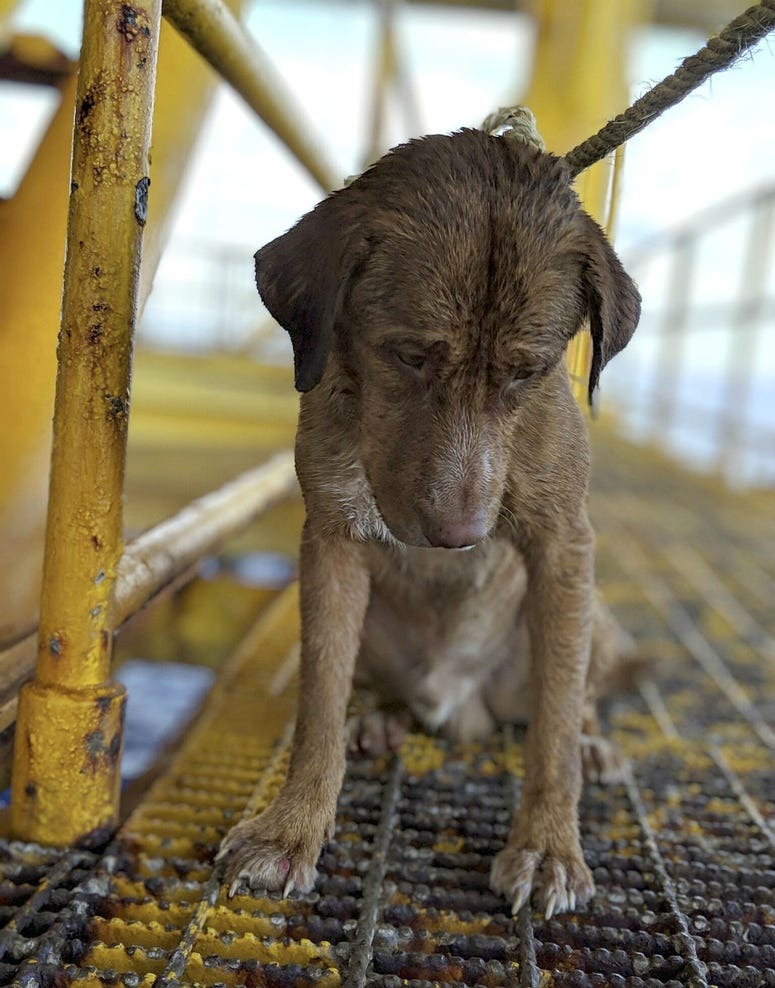 A dog sits on an oil rig after being rescued in the Gulf of Thailand.