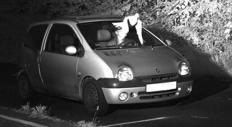 This Tuesday, May 21, 2019 speed camera picture provided by the police in Viersen, Germany, shows a Pigeon in front of the windscreen of a car.