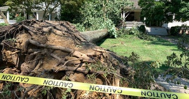 On the day after Isaias hit South Jersey, huge trees are still down along Hammonton's Bellevue Avenue.