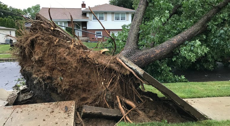 Tree down in Cherry Hill, New Jersey.