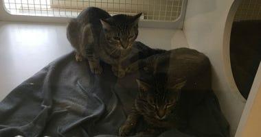 cats at Homeward Bound Pet Adoption Center