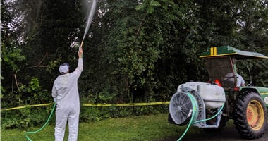 Lanternfly spraying
