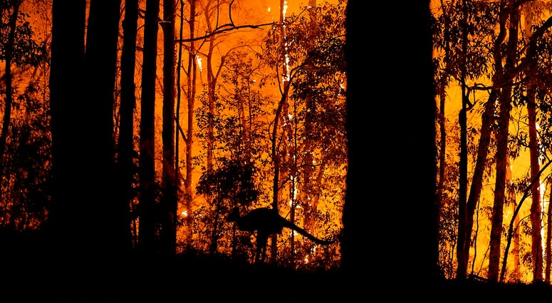 A kangaroo escapes the wildfire in Australia.