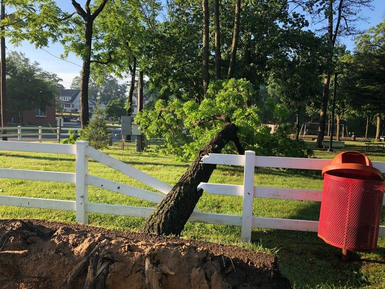 tree down, Magnolia, NJ